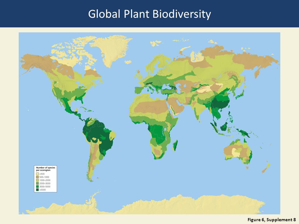 Figure 6, Supplement 8 Global Plant Biodiversity