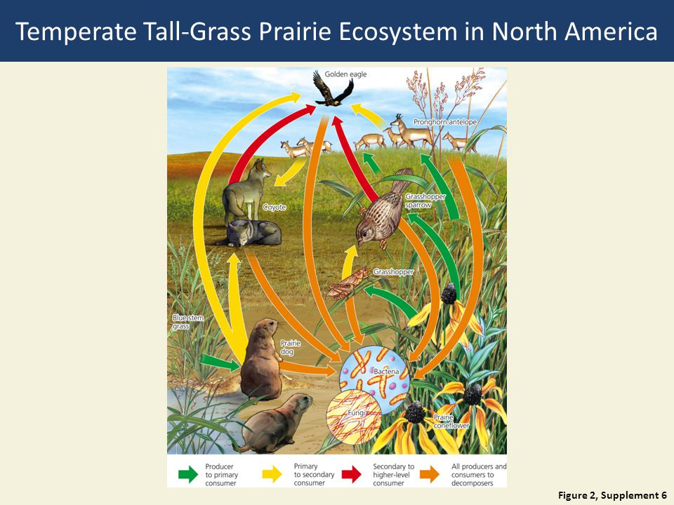 Figure 2, Supplement 6 Temperate Tall-Grass Prairie Ecosystem in North America