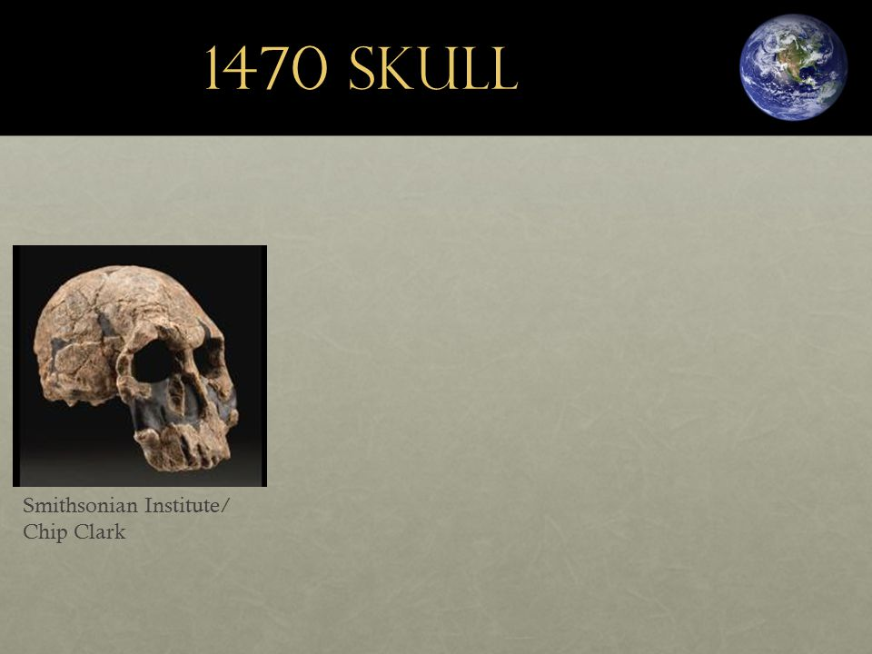 1470 Skull Smithsonian Institute/ Chip Clark
