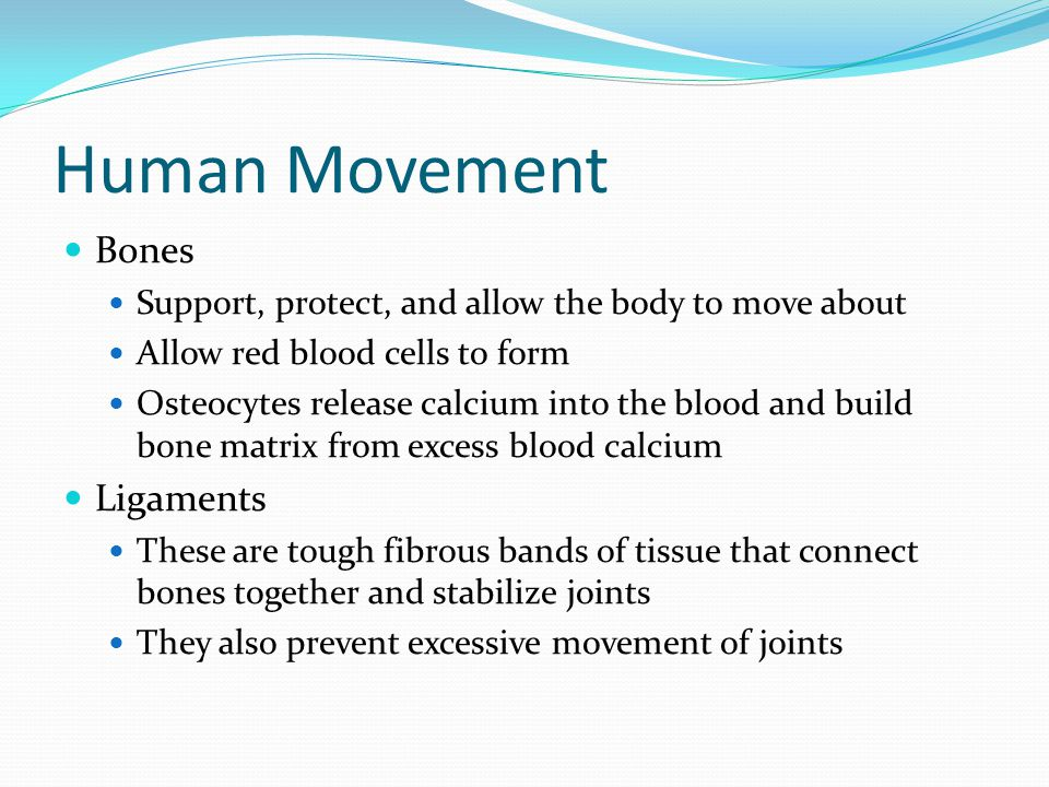 Human Movement Bones Support, protect, and allow the body to move about Allow red blood cells to form Osteocytes release calcium into the blood and build bone matrix from excess blood calcium Ligaments These are tough fibrous bands of tissue that connect bones together and stabilize joints They also prevent excessive movement of joints