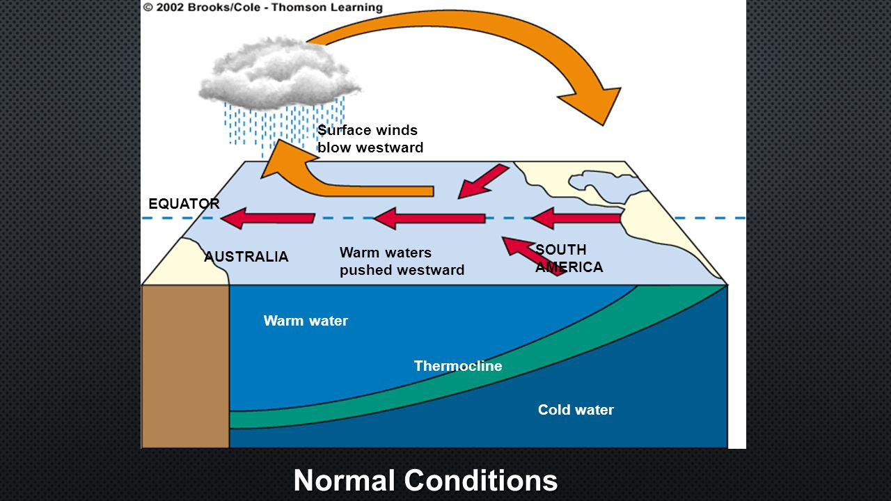 Normal Conditions Cold water Warm water Thermocline SOUTH AMERICA Warm waters pushed westward AUSTRALIA EQUATOR Surface winds blow westward
