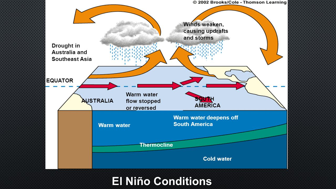 El Niño Conditions Cold water Thermocline Warm water Warm water deepens off South America SOUTH AMERICA Warm water flow stopped or reversed AUSTRALIA EQUATOR Drought in Australia and Southeast Asia Winds weaken, causing updrafts and storms