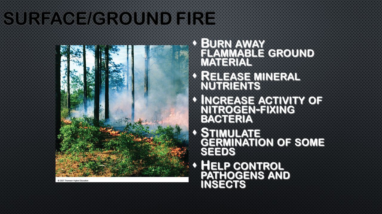 B URN AWAY FLAMMABLE GROUND MATERIAL  R ELEASE MINERAL NUTRIENTS  I NCREASE ACTIVITY OF NITROGEN - FIXING BACTERIA  S TIMULATE GERMINATION OF SOME SEEDS  H ELP CONTROL PATHOGENS AND INSECTS