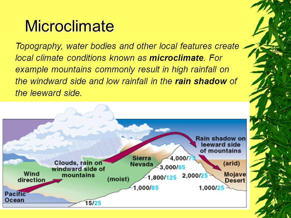 Microclimate Topography, water bodies and other local features create local climate conditions known as microclimate.