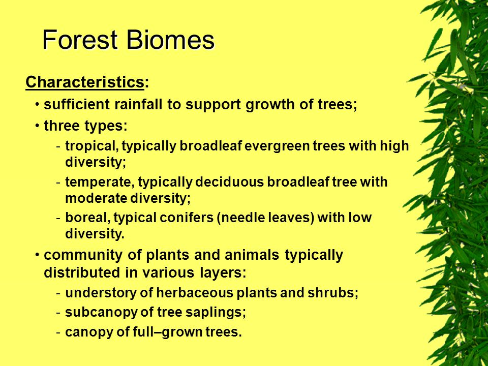 Forest Biomes Characteristics: sufficient rainfall to support growth of trees; three types: -tropical, typically broadleaf evergreen trees with high diversity; -temperate, typically deciduous broadleaf tree with moderate diversity; -boreal, typical conifers (needle leaves) with low diversity.