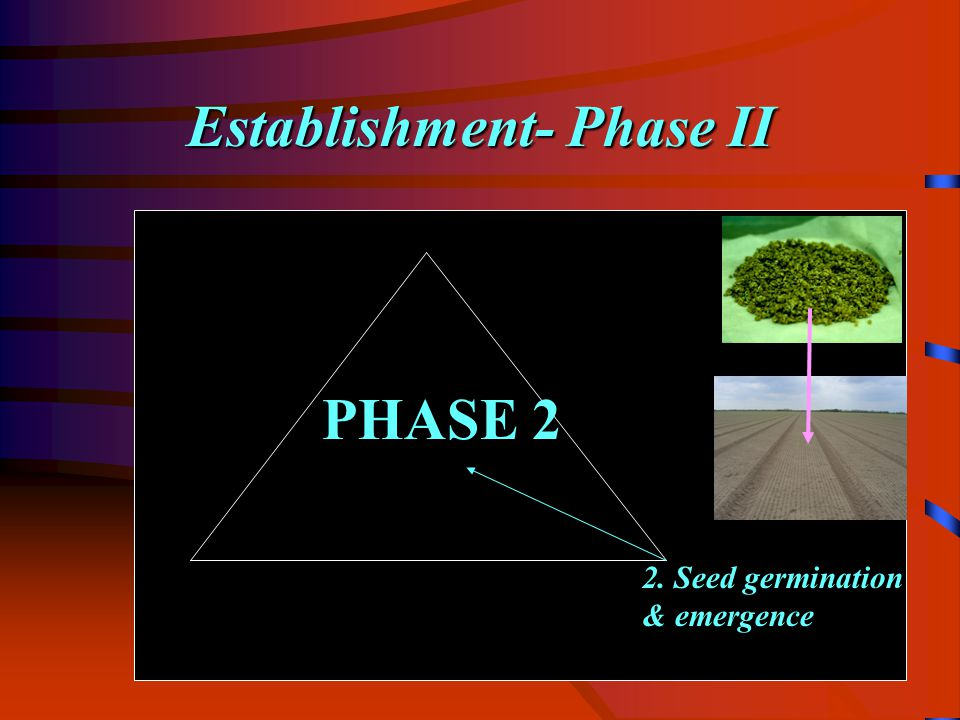 Establishment- Phase II 2. Seed germination & emergence PHASE 2