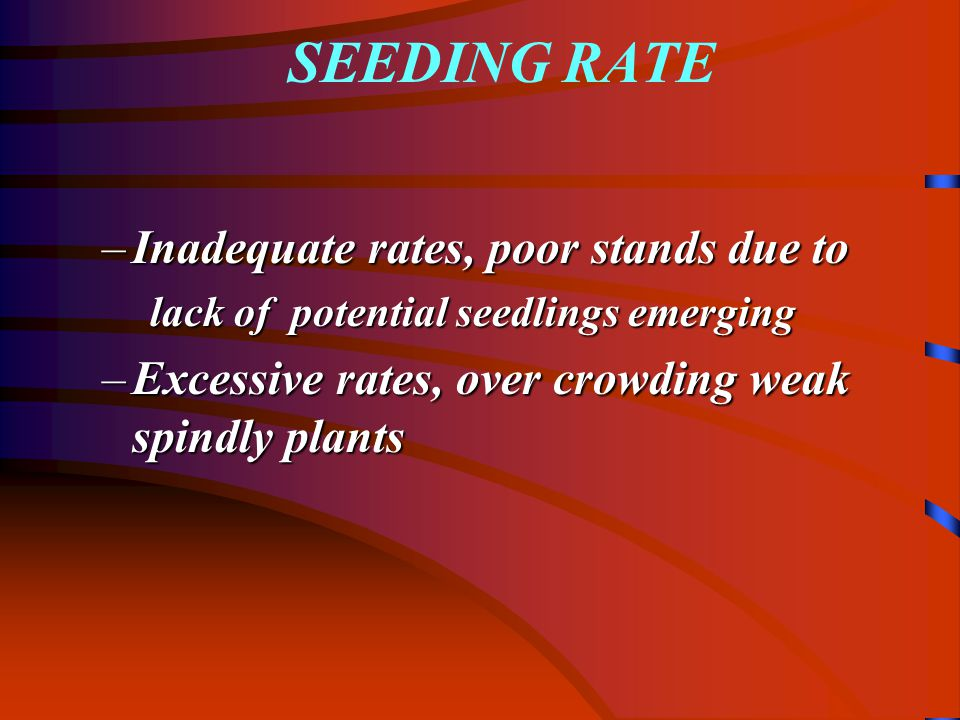 SEEDING RATE –Inadequate rates, poor stands due to lack of potential seedlings emerging –Excessive rates, over crowding weak spindly plants
