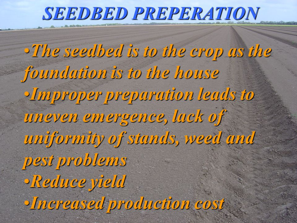 SEEDS Embryonic or New plantsEmbryonic or New plants –plant in miniature - Contained in a Dispersing structuresContained in a Dispersing structures –protected in a cover (the seed coat) until a self sufficient autotrophic organism can be established
