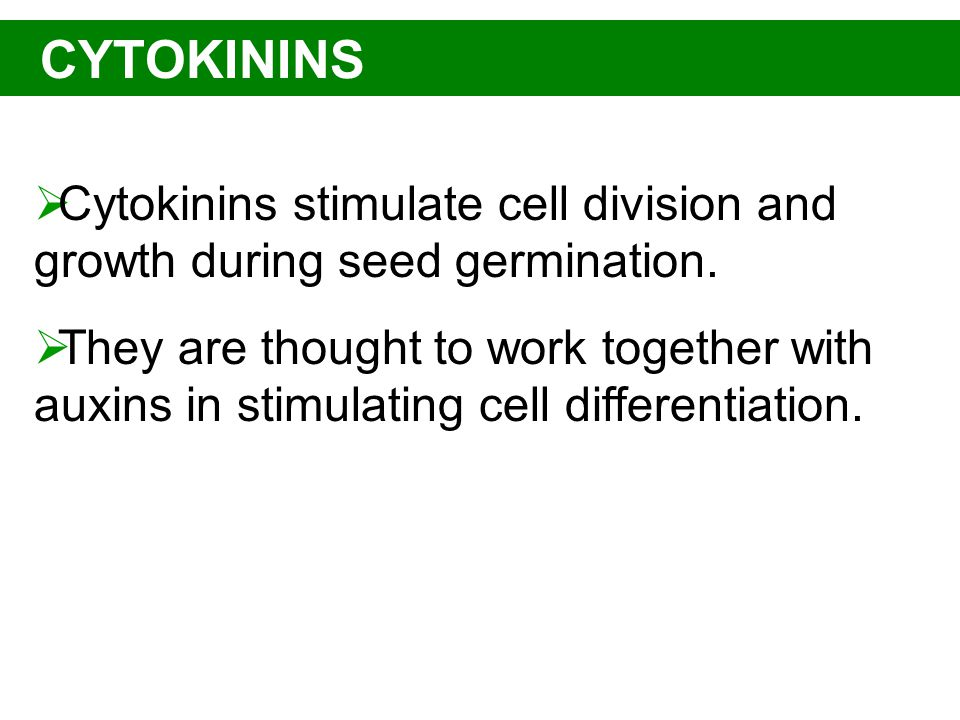 CYTOKININS  Cytokinins stimulate cell division and growth during seed germination.  They are thought to work together with auxins in stimulating cel