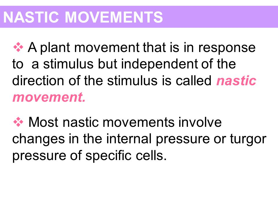 NASTIC MOVEMENTS  A plant movement that is in response to a stimulus but independent of the direction of the stimulus is called nastic movement.  Mo
