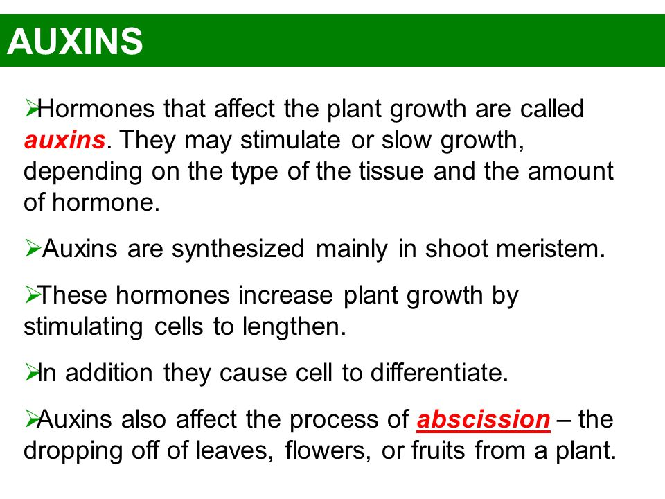 AUXINS  Hormones that affect the plant growth are called auxins. They may stimulate or slow growth, depending on the type of the tissue and the amoun