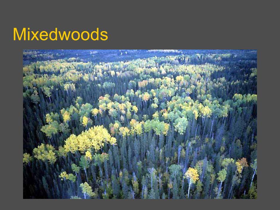 Mixedwoods