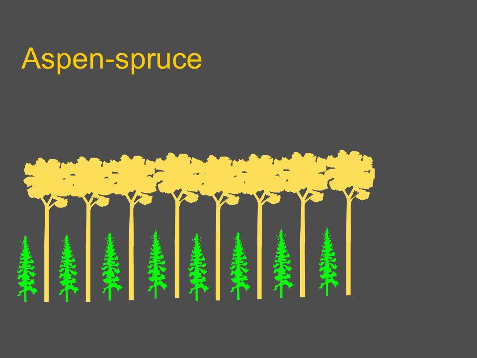 Aspen-spruce