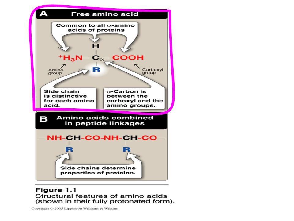 For an amino acid, e.g.