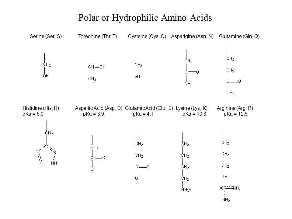 Polar or Hydrophilic Amino Acids Histidine (His, H) Aspartic Acid (Asp, D) Glutamic Acid (Glu, E) Lysine (Lys, K) Arginine (Arg, R) pKa = 6.0 pKa = 3.9 pKa = 4.1 pKa = 10.8 pKa = 12.5 Serine (Ser, S) Threonine (Thr, T) Cysteine (Cys, C) Asparigine (Asn, N) Glutamine (Gln, Q)