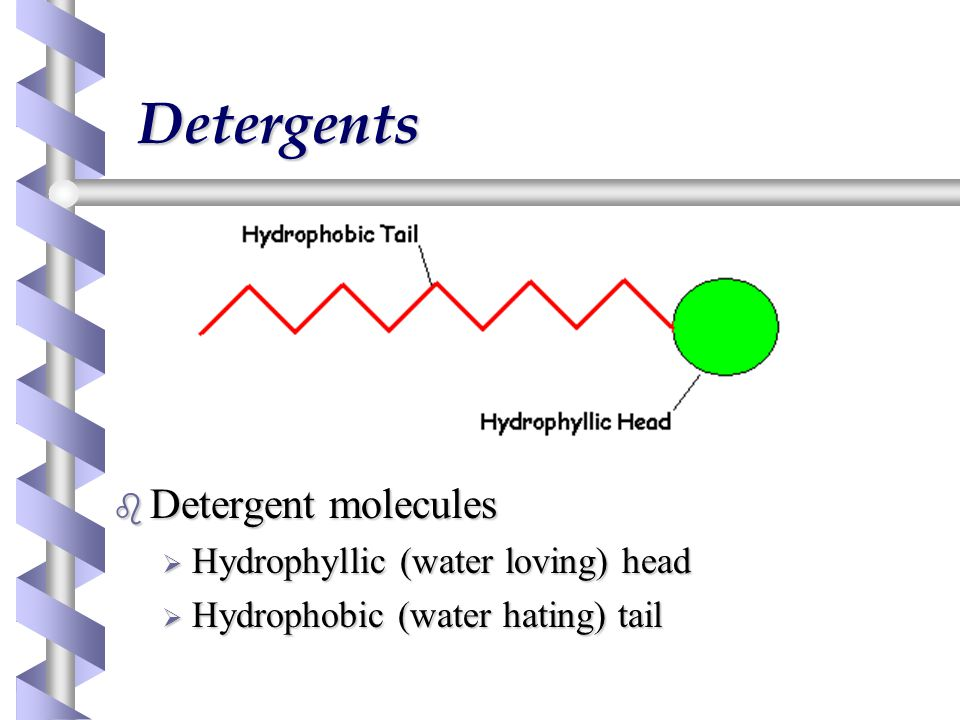 Detergents b Detergent molecules  Hydrophyllic (water loving) head  Hydrophobic (water hating) tail