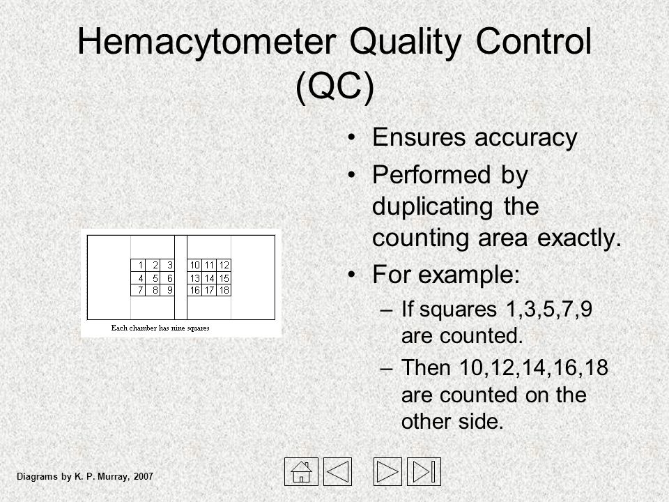 Hemacytometer Quality Control (QC) Ensures accuracy Performed by duplicating the counting area exactly. For example: –If squares 1,3,5,7,9 are counted