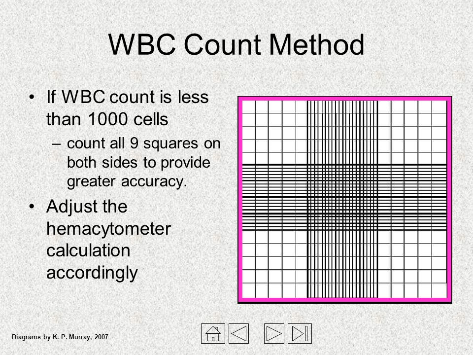 WBC Count Method If WBC count is less than 1000 cells –count all 9 squares on both sides to provide greater accuracy. Adjust the hemacytometer calcula