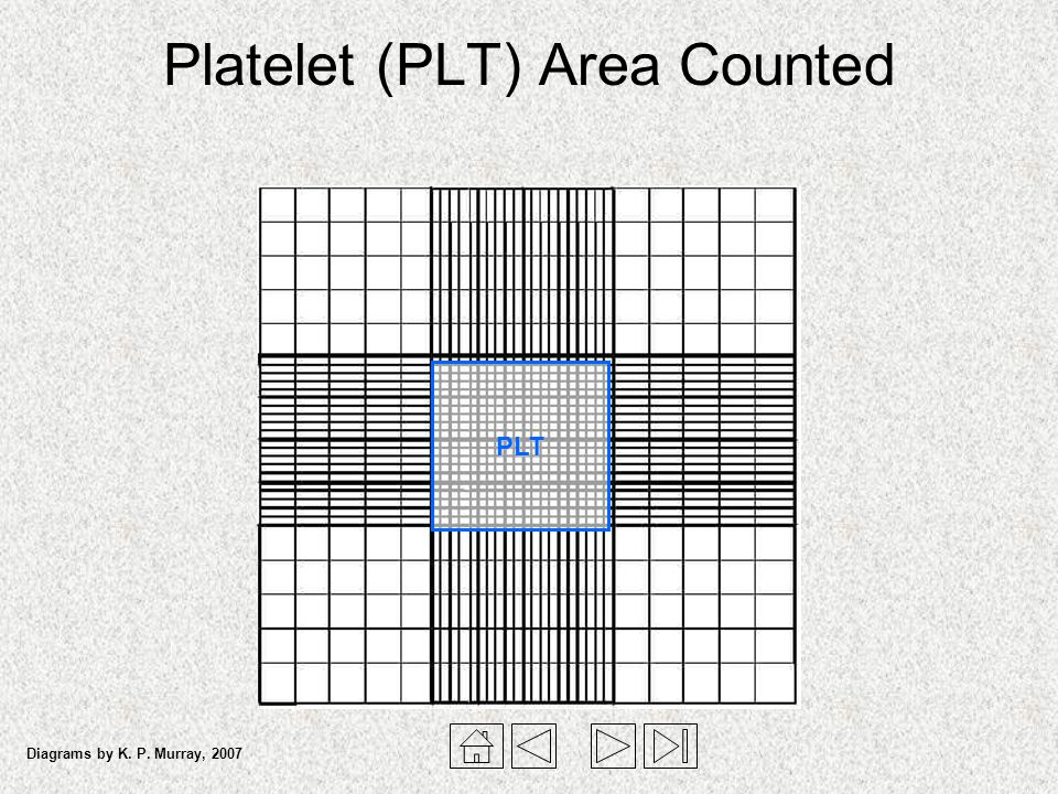 Platelet (PLT) Area Counted PLT Diagrams by K. P. Murray, 2007