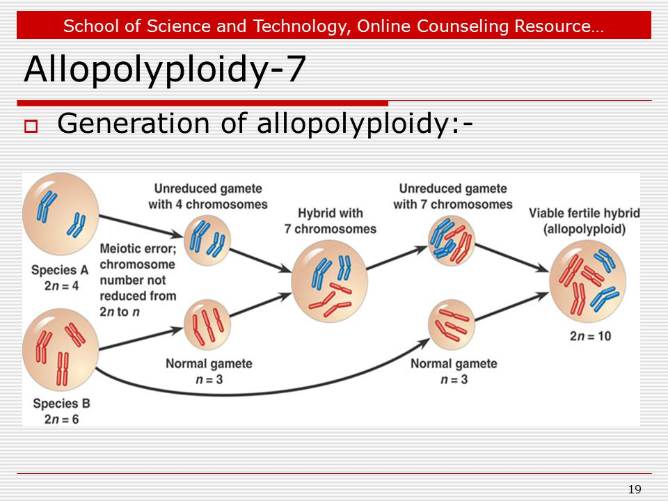 School of Science and Technology, Online Counseling Resource… Allopolyploidy-7  Generation of allopolyploidy:- 19
