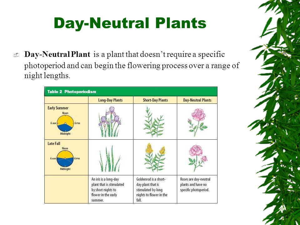 Day-Neutral Plants  Day-Neutral Plant is a plant that doesn't require a specific photoperiod and can begin the flowering process over a range of nigh