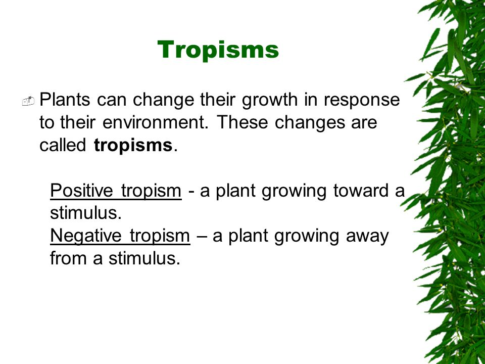  Plants can change their growth in response to their environment. These changes are called tropisms. Positive tropism - a plant growing toward a stim