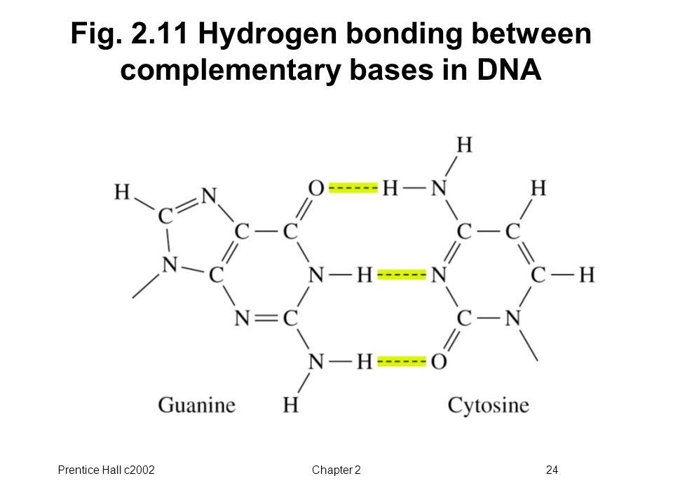 Prentice Hall c2002Chapter 224 Fig. 2.11 Hydrogen bonding between complementary bases in DNA