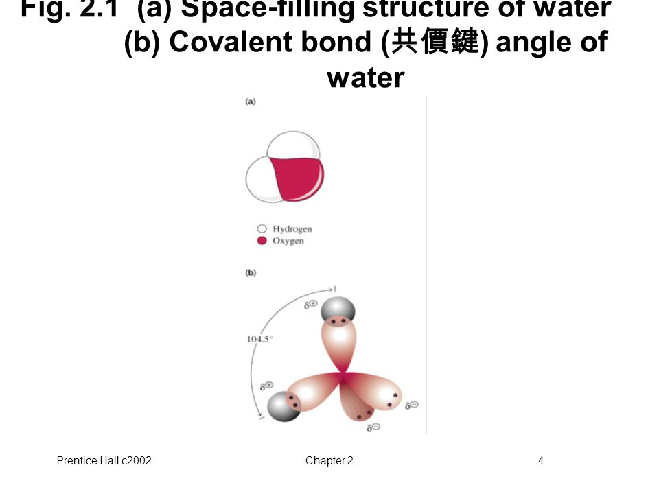 Prentice Hall c2002Chapter 24 Fig. 2.1 (a) Space-filling structure of water (b) Covalent bond ( 共價鍵 ) angle of water
