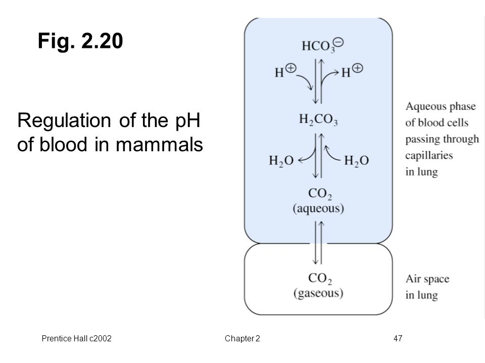 Prentice Hall c2002Chapter 247 Fig. 2.20 Regulation of the pH of blood in mammals