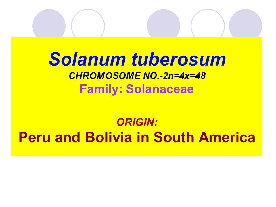 Solanum tuberosum CHROMOSOME NO.-2n=4x=48 Family: Solanaceae ORIGIN: Peru and Bolivia in South America