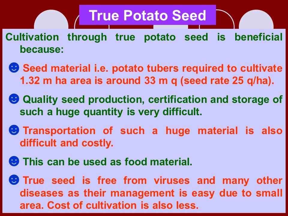 True Potato Seed Cultivation through true potato seed is beneficial because: ☻ Seed material i.e. potato tubers required to cultivate 1.32 m ha area i