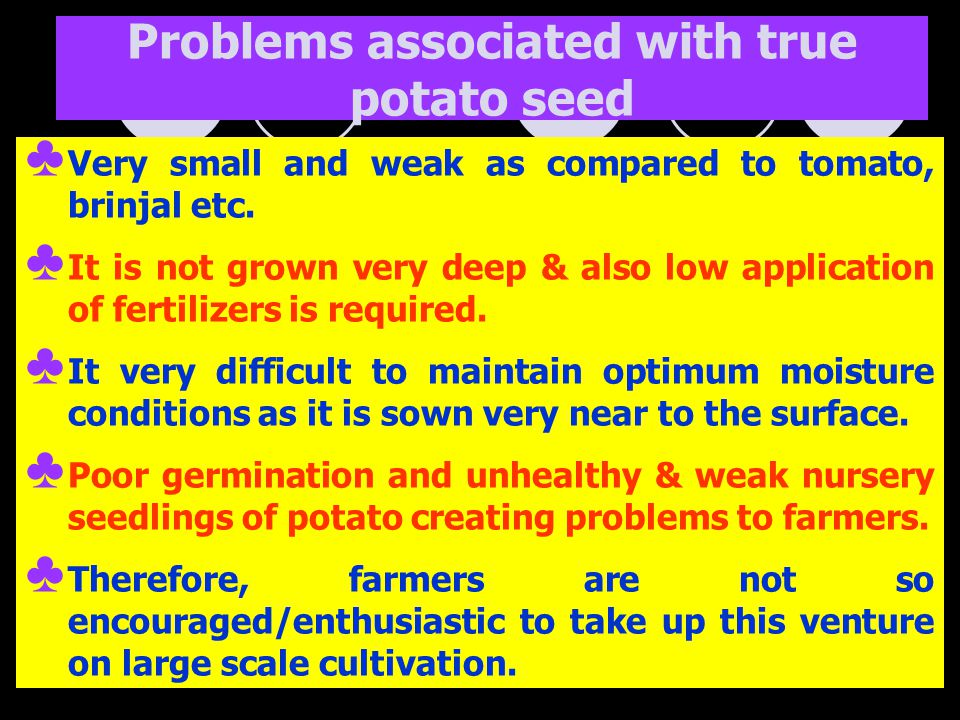 Problems associated with true potato seed ♣ Very small and weak as compared to tomato, brinjal etc. ♣ It is not grown very deep & also low application