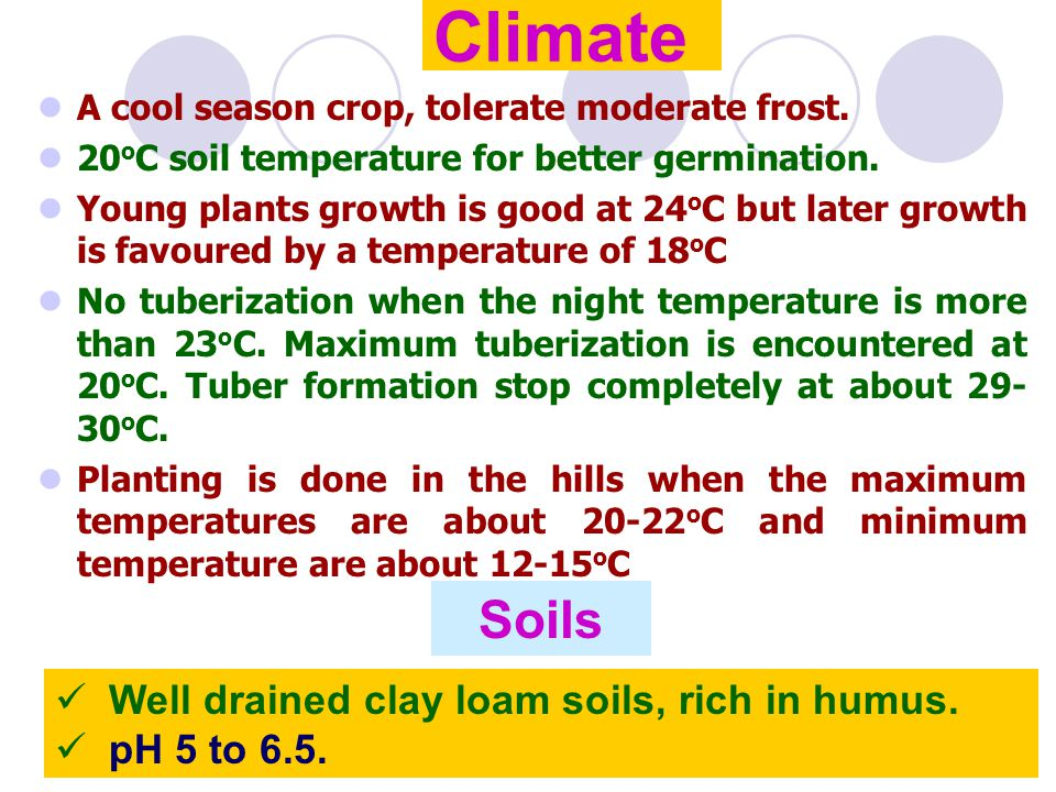 Climate A cool season crop, tolerate moderate frost. 20 o C soil temperature for better germination. Young plants growth is good at 24 o C but later g