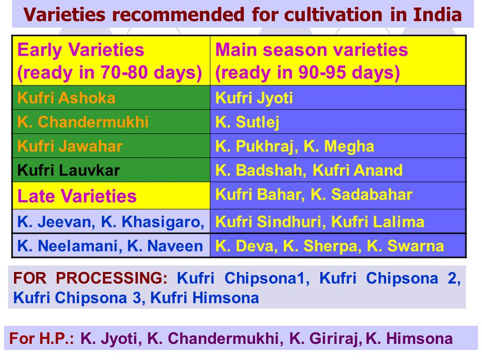 Varieties recommended for cultivation in India Early Varieties (ready in 70-80 days) Main season varieties (ready in 90-95 days) Kufri AshokaKufri Jyo