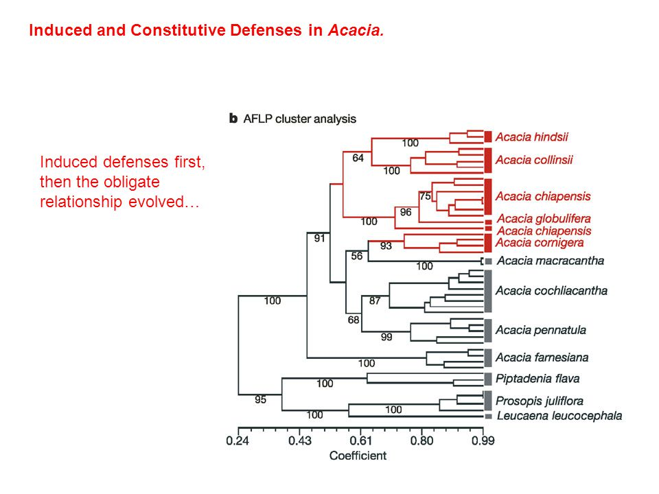 Induced and Constitutive Defenses in Acacia.