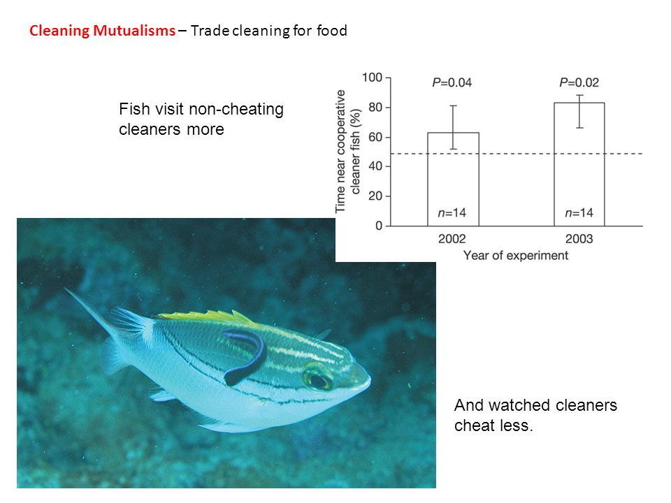 And watched cleaners cheat less. Fish visit non-cheating cleaners more