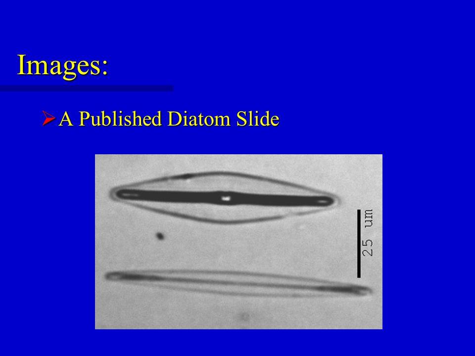 Images:  A Published Diatom Slide