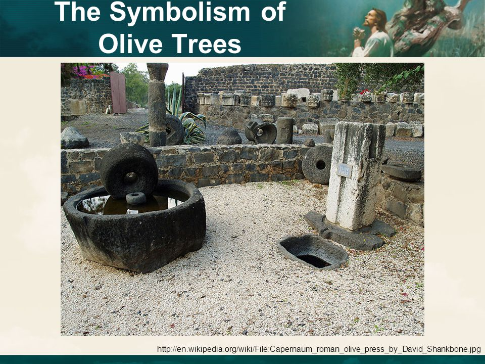 http://en.wikipedia.org/wiki/File:Capernaum_roman_olive_press_by_David_Shankbone.jpg The Symbolism of Olive Trees