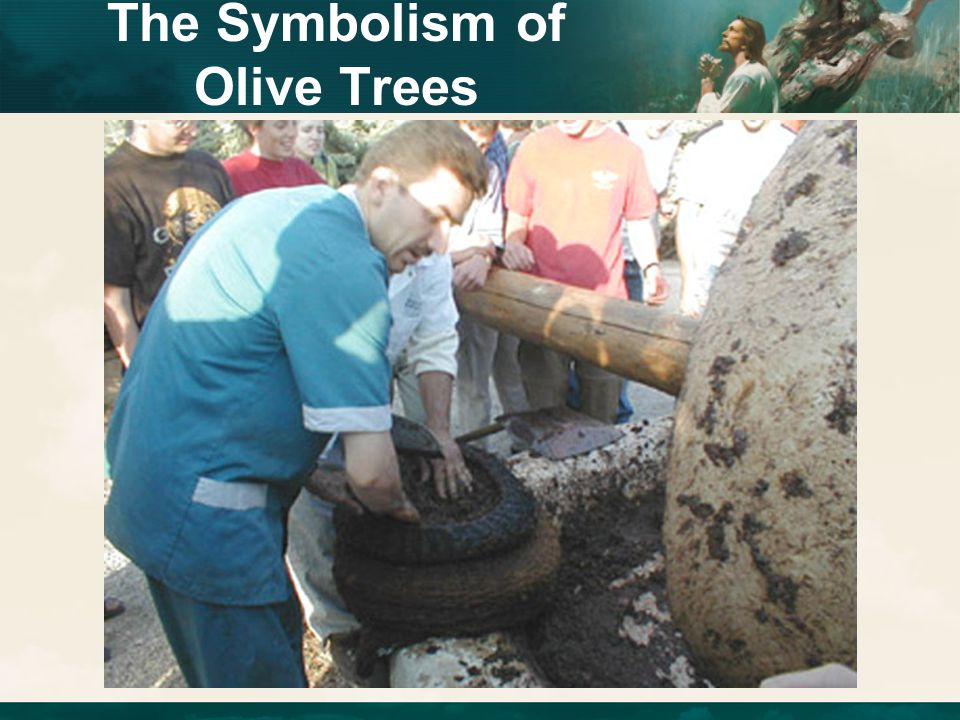 The Symbolism of Olive Trees