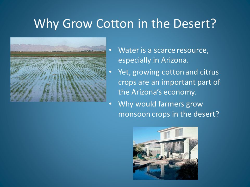Why Grow Cotton in the Desert. Water is a scarce resource, especially in Arizona.