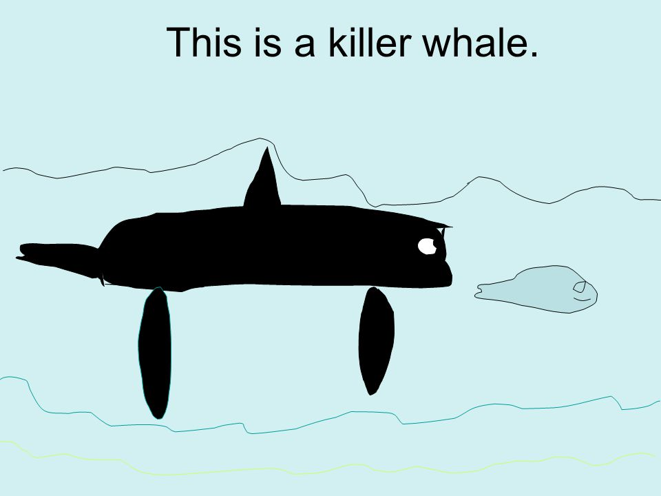 This is a killer whale.