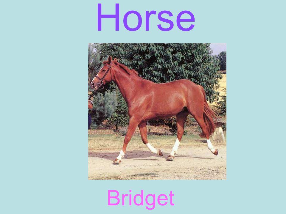Horse Bridget