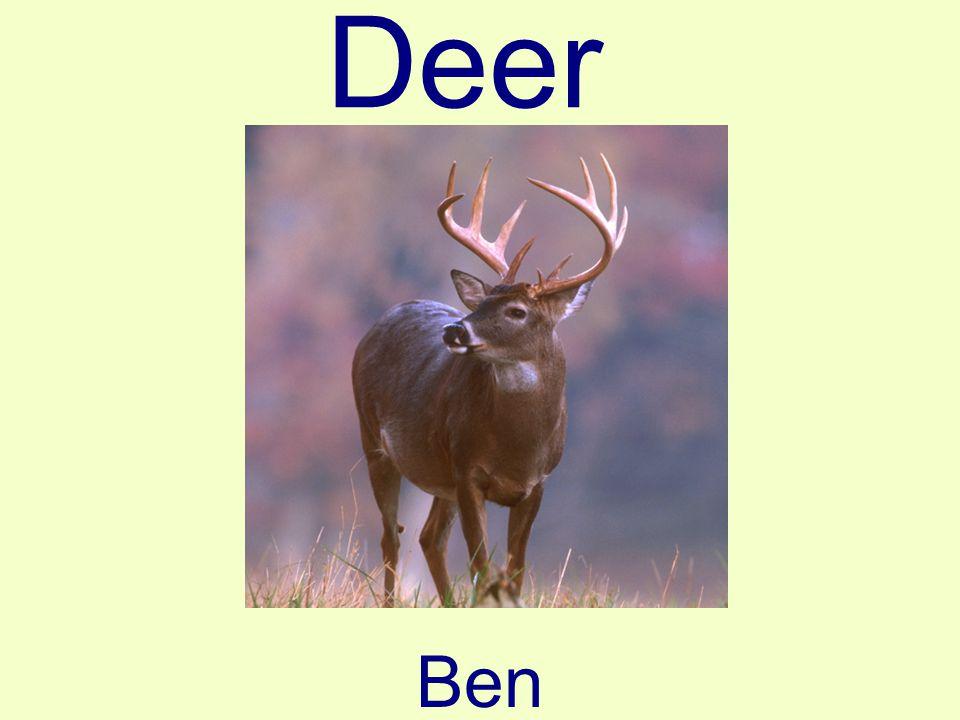Deer Ben