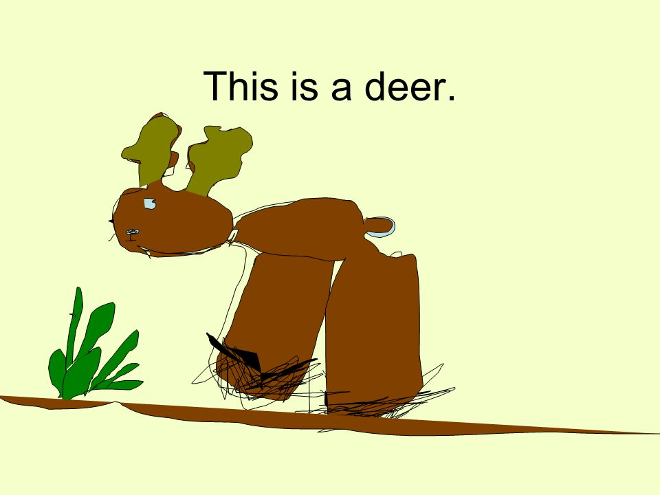 This is a deer.