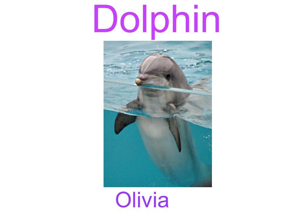 Dolphin Olivia