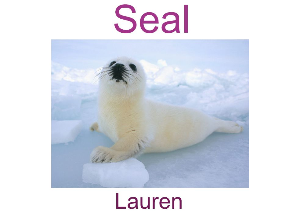 Seal Lauren