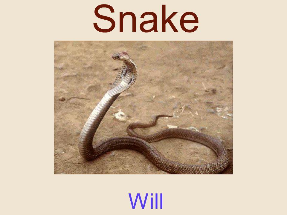 Snake Will