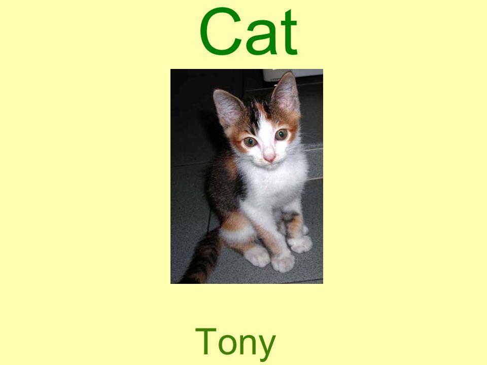 Cat Tony