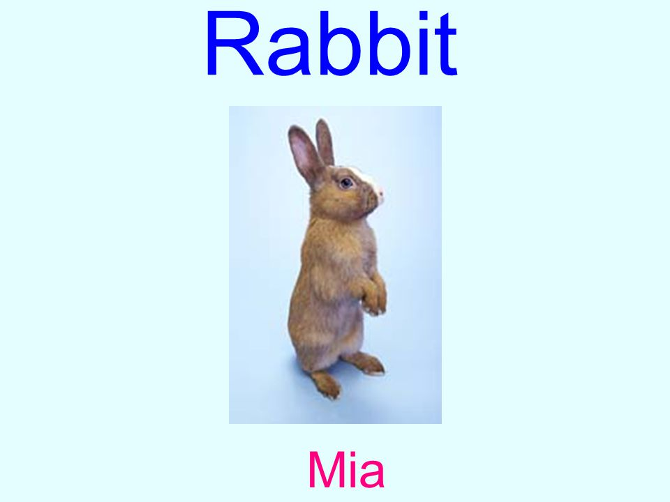 Rabbit Mia