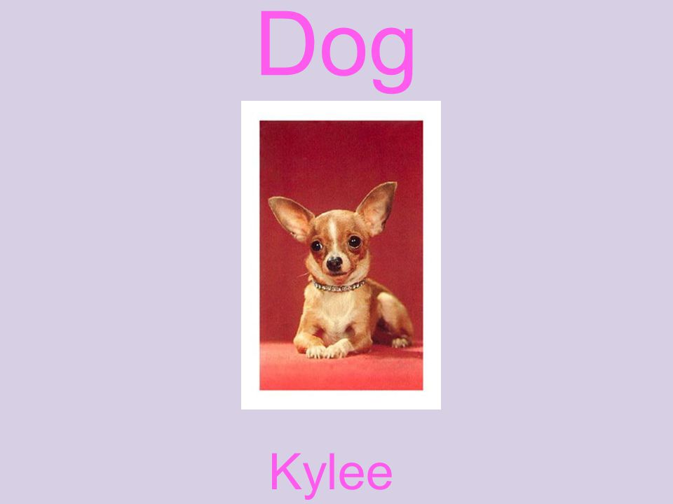 Dog Kylee